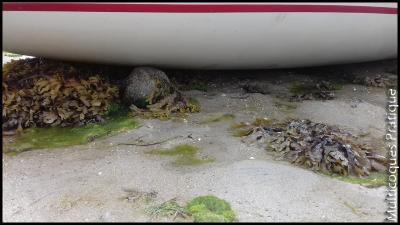 Coque posée sur un rocher